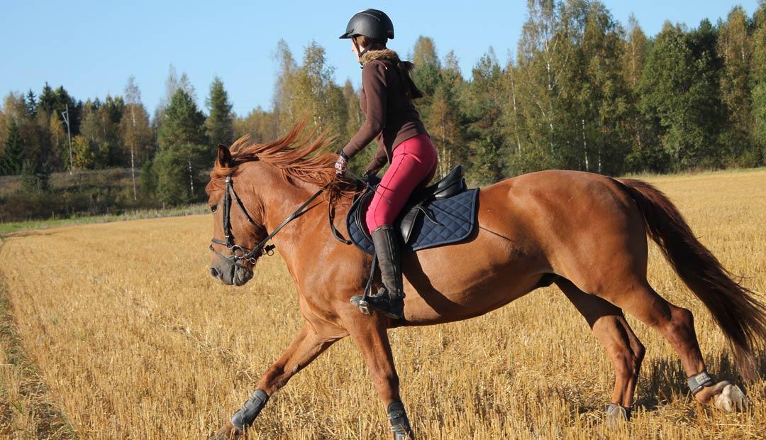 Hevosenleikkiä - Korpilahti